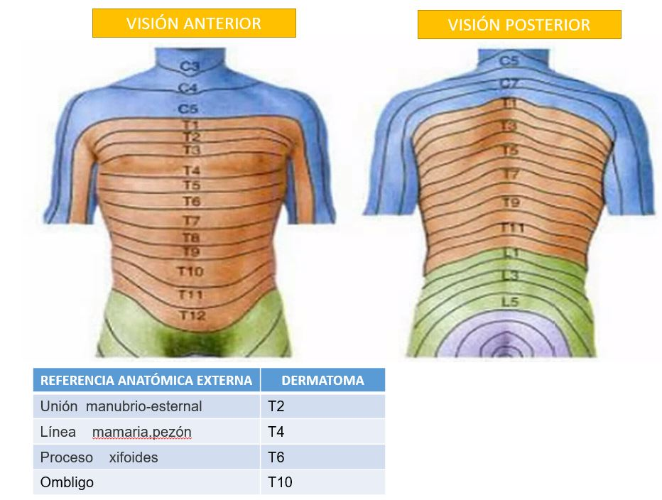 Anatomía de superficie de la pared torácica | Dolopedia