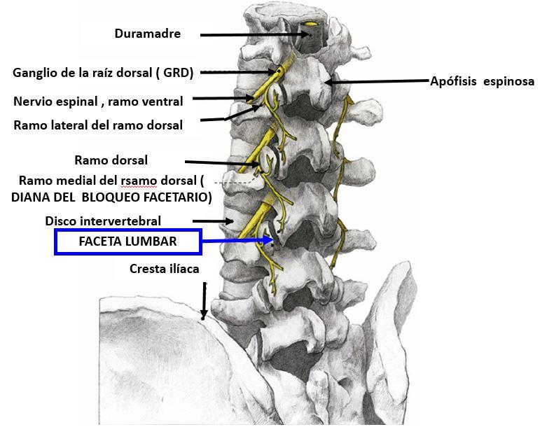 Edema bilateral del antebrazo