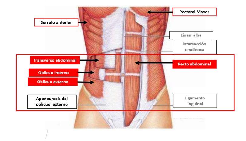 la flexión pélvica anterior alivia el dolor
