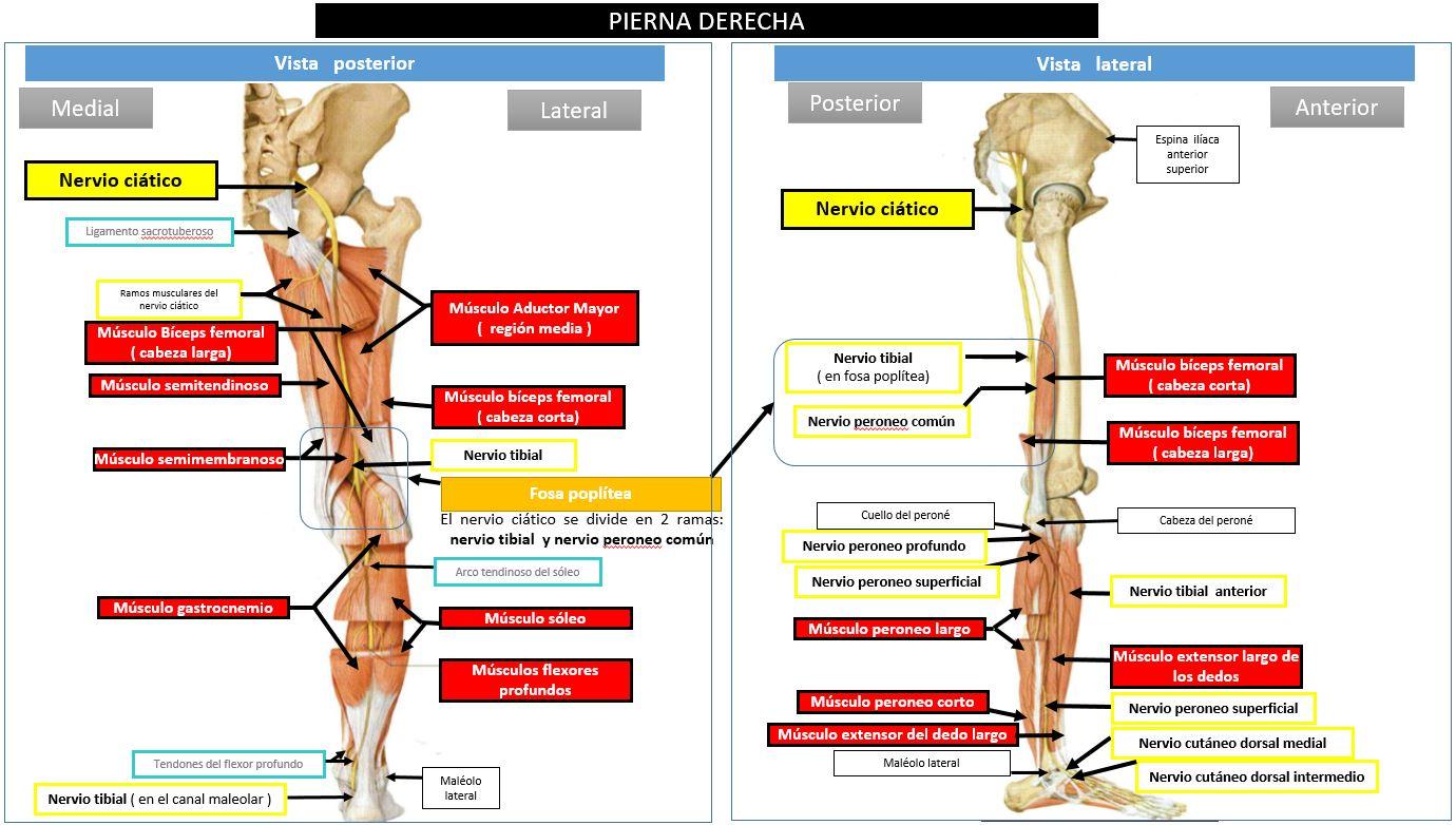 cirugia para nervio ciatico popliteo externo