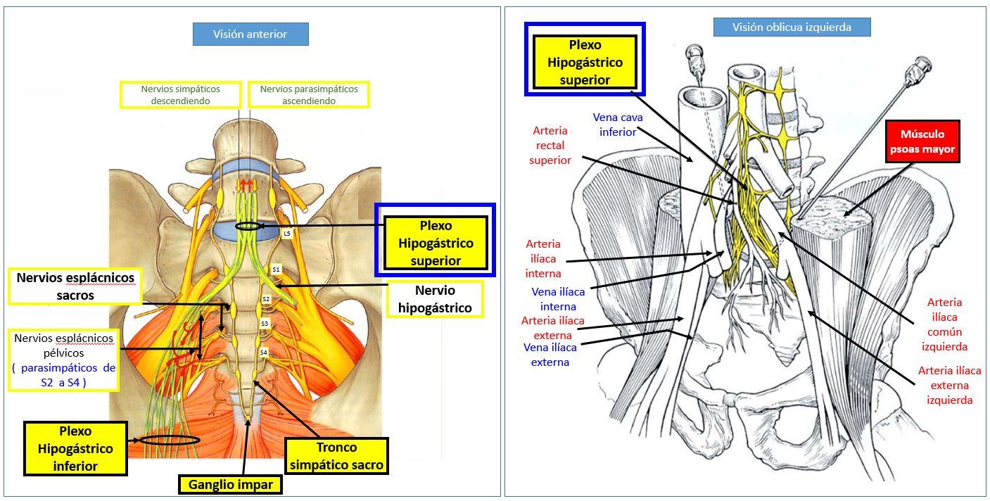 nervios pelvicos y sacros