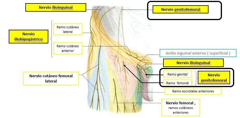 lesión del ligamento inguinal